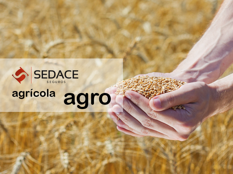 Seguros Agrícola / Agro