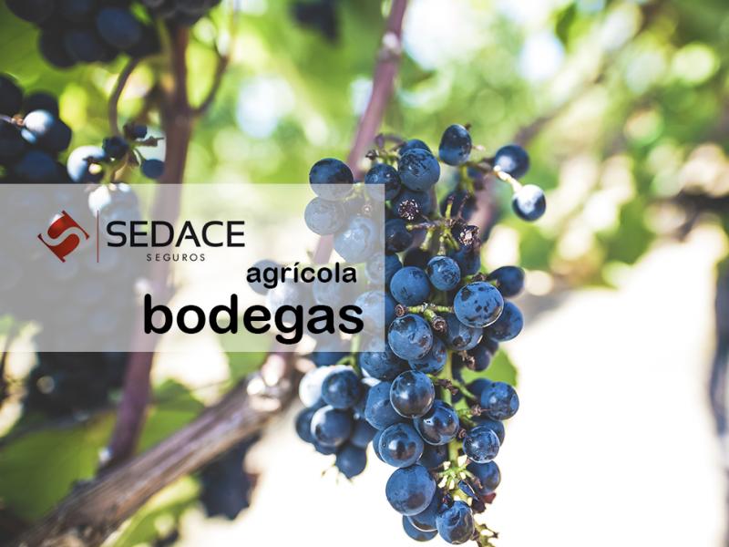 Seguros Agrícola / Bodegas